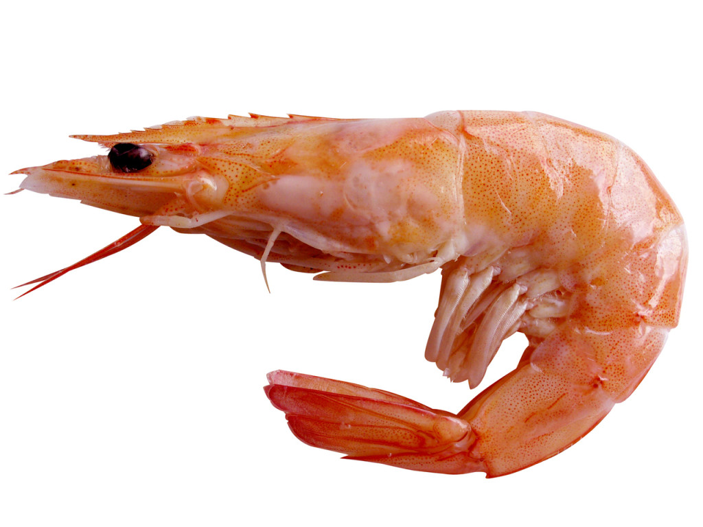 Shrimp fish to avoid fish to enjoy weight loss nutrition